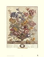 April/Twelve Months of Flowers, 1730 Framed Print