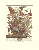 August/Twelve Months of Flowers, 1730 Framed Print