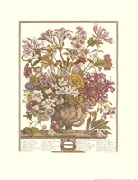 October/Twelve Months of Flowers, 1730 Framed Print
