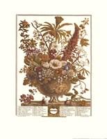 December/Twelve Months of Flowers, 1730 Framed Print
