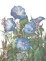 Morning Glories Fine Art Print