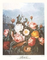 A Group of Roses Fine Art Print