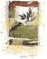 Leaf Study IV Framed Print
