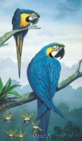 Blue and Gold Macaw Fine Art Print