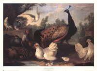 Barnyard with Chickens Fine Art Print