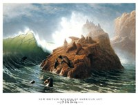 Seal Rock Fine Art Print