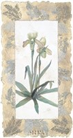 Elegant Orchid Fine Art Print