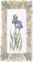 Emperor Iris Fine Art Print