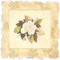 Victorian Magnolia Fine Art Print