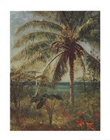 Palm Tree, Nassau Fine Art Print