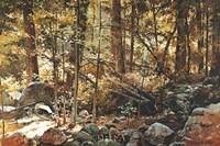 Sunlit Forest (Yosemite) Fine Art Print