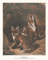 Young Freebooters Fine Art Print