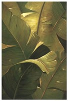 Amazon Canopy Fine Art Print