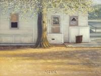 Sunlit Oak Fine Art Print