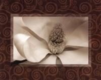 Magnolia Window I Fine Art Print