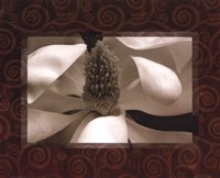 Magnolia Window II Framed Print