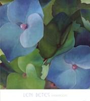 Hydrangeas Fine Art Print