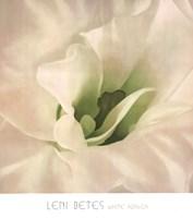 White Azalea Fine Art Print