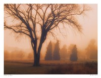 Whisper of Dawn Fine Art Print