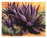 Purple Agaves On The Rocks Fine Art Print