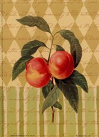 Botanical Peaches Fine Art Print