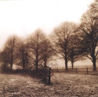 Fence Row and Trees Fine Art Print