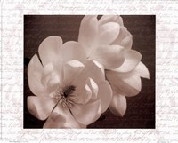Winter Magnolia II Fine Art Print