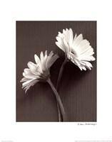 Fresh Cut Gerbera Daisy IV Framed Print