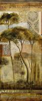 Italian Arbor II Fine Art Print