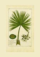 Palm Leaves II Framed Print