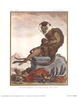 Mangabey A Collier Blanc Fine Art Print