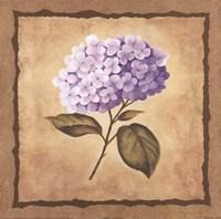 Hydrangea Fine Art Print