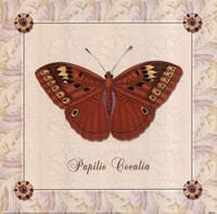 Papilio Cocalia Framed Print