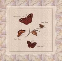 Papilio I Framed Print