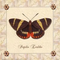 Papilio Evalthe I Fine Art Print