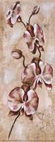 Tropical Orchid II Fine Art Print