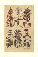 Botanicals Fine Art Print