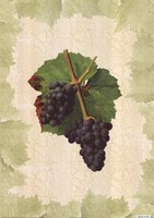 Antique Grapes - Gougenot Fine Art Print
