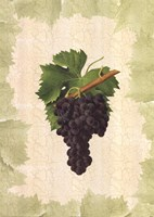 Antique Grapes - Aspiran Fine Art Print