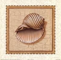 Seashells III Fine Art Print