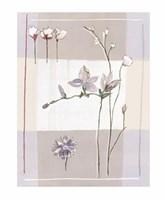 Impression Florale II Fine Art Print