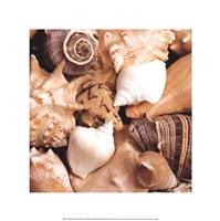 Beachside Shells Fine Art Print