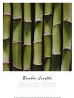 Bamboo Lengths Fine Art Print