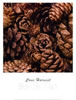 Cone Harvest Fine Art Print