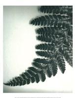 Fern Leaf II Framed Print