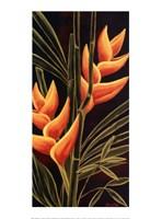 Heliconia Fine Art Print