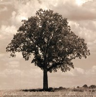Branching Out Fine Art Print