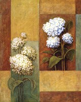 Blue & White Hydrangea Fine Art Print