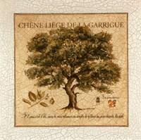 Chene Liege De La Garrigue Fine Art Print