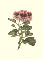 Pink Geranium II Fine Art Print